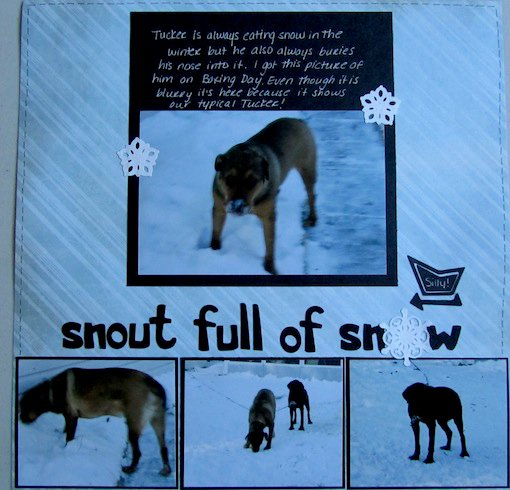 Snout full of snow
