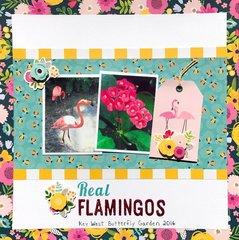Real Flamingos