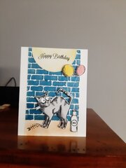 Alley Cat Birthday