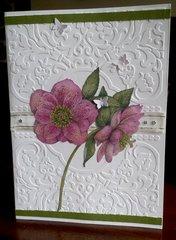 Anemone Sympathy Card