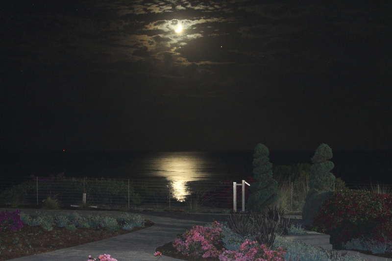 Moonlit night view.