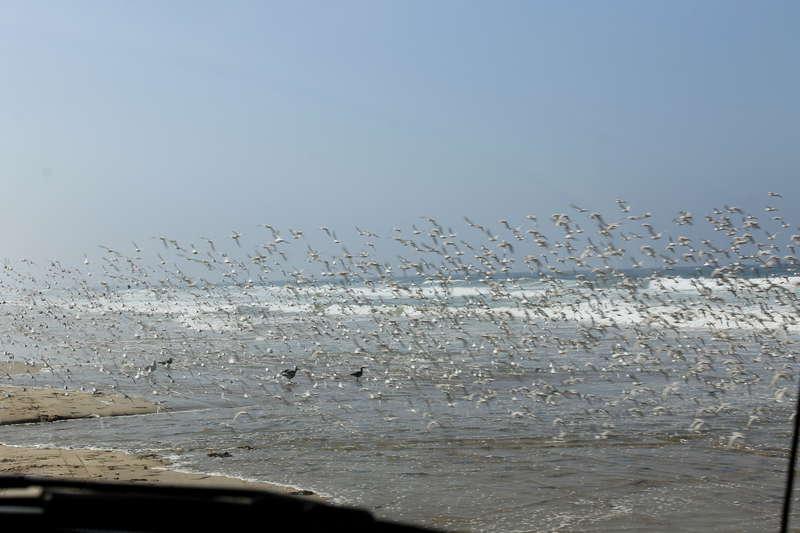 Beautiful flock of sea birds