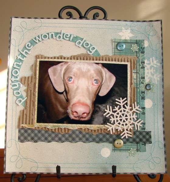 Payton the Wonder Dog