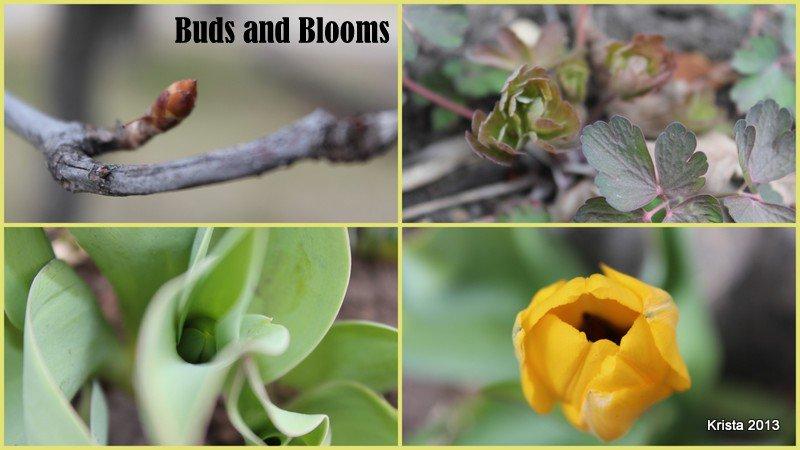 Mini#8 - Budding or Blooming