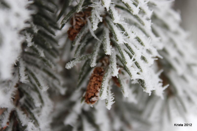 POD 2 - Pine cones