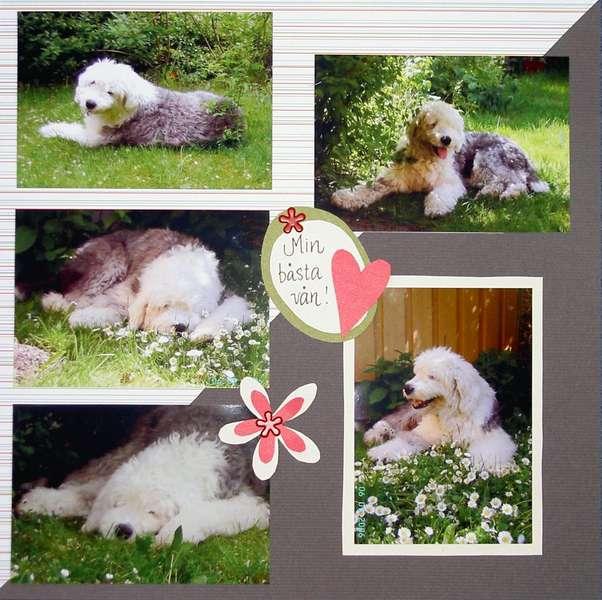 Hobbe - my best friend