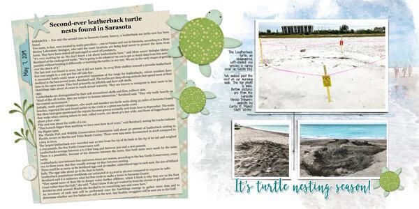 Leatherback Sea Turtle Nest