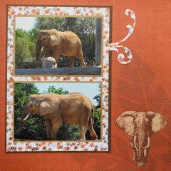 Zoo Elephants - RHP