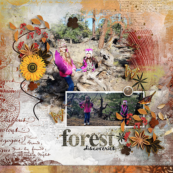 Forest Discoveries