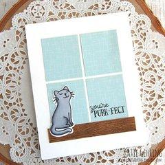 Purr-fect kitty card