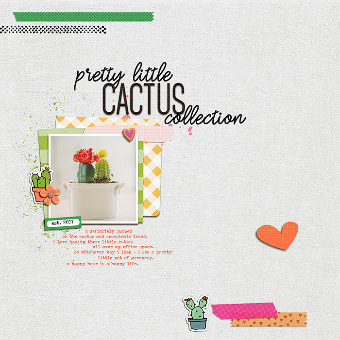 pretty little cactus collection