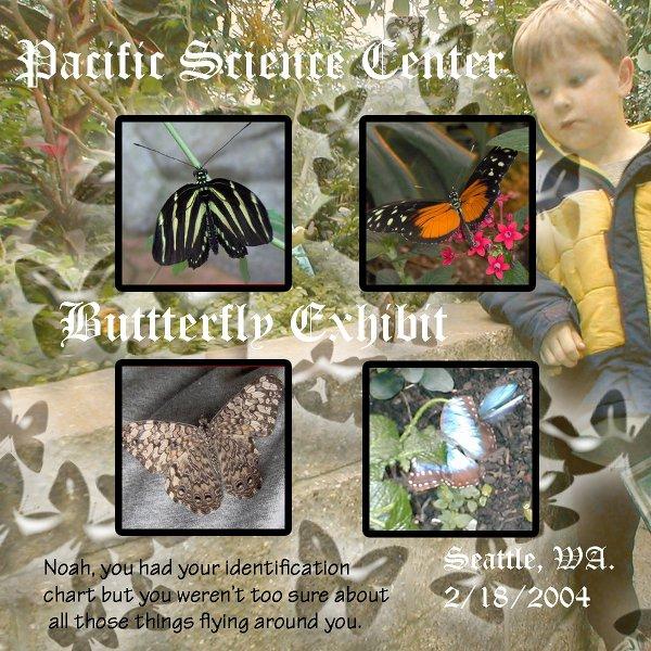 Butterfly Exhibit-Online challenge 3