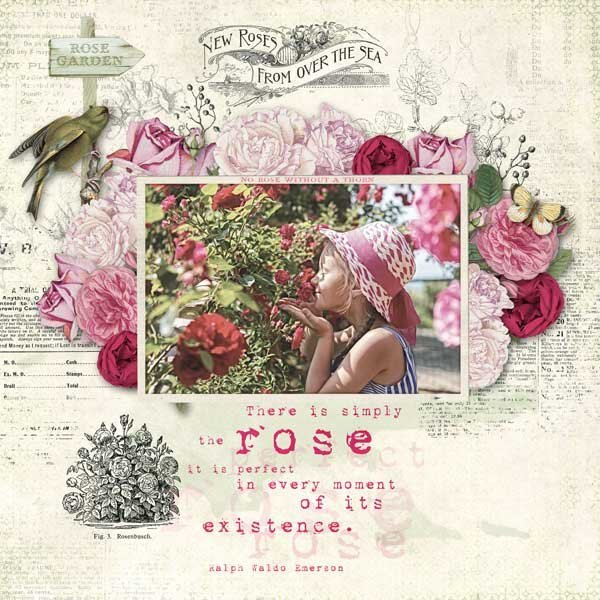 The Rose Garden by On A Whimsical Adventure