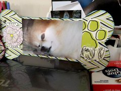 Pet chipboard Album