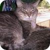 catzscrapper
