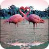 Flamingo Annie