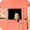 loves ranch life