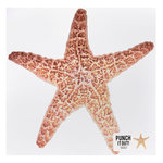 American Crafts - 12 x 12 Die Cut Paper - Starfish