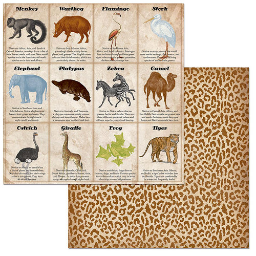 BoBunny - Jungle Life Collection - 12 x 12 Double Sided Paper - Animals