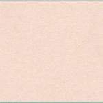 Bazzill Basics - Bulk Cardstock Pack - 25 Sheets - 12x12 - Twig, CLEARANCE
