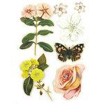 BasicGrey - Curio Collection - Pops - 3 Dimensional Cardstock Stickers