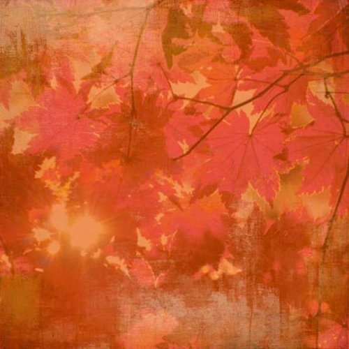 BasicGrey - Indian Summer Collection - 12 x 12 Paper - Aspen