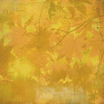BasicGrey - Indian Summer Collection - 12 x 12 Paper - Maize, CLEARANCE