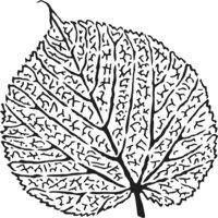 The Crafter's Workshop - 12 x 12 Stencils - Skeletal Leaf