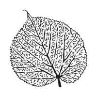 The Crafter's Workshop - 6 x 6 Stencils - Skeletal Leaf