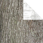 Creative Imaginations - Great Outdoors Collection - 12 x 12 Double Sided Paper - Tree Bark