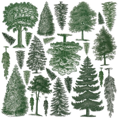 Creative Imaginations - Great Outdoors Collection - Die Cut Pieces - Trees