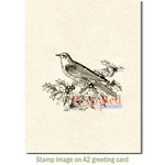 Deep Red Stamps - Cling Mounted Rubber Stamp - Bird and Holly