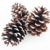 Foundations Decor - Tray Decor - Frosted Pine Cones - 3 Pack