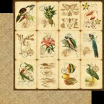 Graphic 45 - Tropical Travelogue Collection - 12 x 12 Double Sided Paper - Botanica
