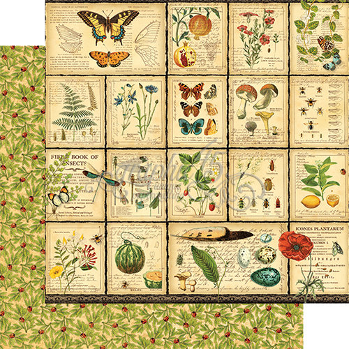 Graphic 45 - Nature Sketchbook Collection - 12 x 12 Double Sided Paper - Diary of a Botanist