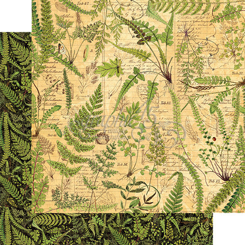 Graphic 45 - Nature Sketchbook Collection - 12 x 12 Double Sided Paper - Verdant Woodlands