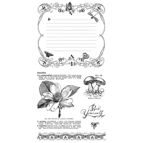 Graphic 45 - Hampton Art - Nature Sketchbook Collection - Cling Mounted Rubber Stamps - Three