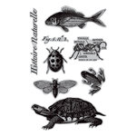 Hampton Art - 7 Gypsies - Cling Mounted Rubber Stamps - Nature's Kingdom