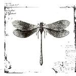 Hampton Art - Art Warehouse - Wood Mounted Stamps - Vintage Dragonfly