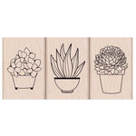 Hero Arts - Garden Collection - Woodblock - Wood Mounted Stamps - Succulent Trio