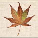 Inkadinkado - Photo Realistic Collection - Wood Mounted Stamps - Japanese Maple