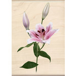 Inkadinkado - Photo Realistic Collection - Wood Mounted Stamps - Pink Lily