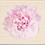 Inkadinkado - Photo Realistic Collection - Wood Mounted Stamps - Pink Carnation