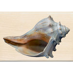 Inkadinkado - Photo Realistic Collection - Wood Mounted Stamps - Conch Shell