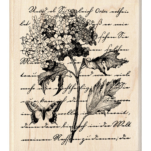 Inkadinkado - Wood Mounted Stamps - TCM Botanical Script