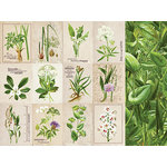 Kaisercraft - Botanica Collection - 12 x 12 Double Sided Paper - Habitat