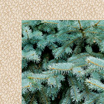 Kaisercraft - Mint Wishes Collection - Christmas - 12 x 12 Double Sided Paper - Fresh Pine
