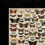 Kaisercraft - Anthology Collection - 12 x 12 Double Sided Paper - Entomology