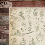 Kaisercraft - Anthology Collection - 12 x 12 Double Sided Paper - Herbs
