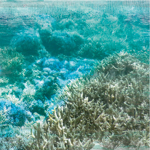 Kaisercraft - Deep Sea Collection - 12 x 12 Double Sided Paper - Barrier Reef